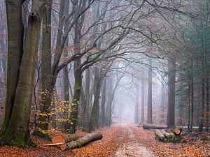 De houtwouden van Tvurk Photography