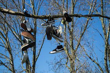 Arbre à chaussures sur Ruud Dumas