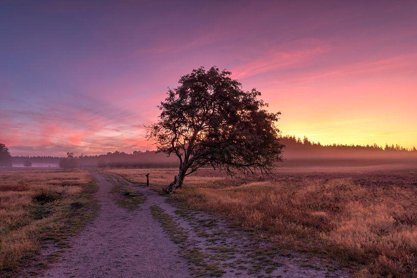 Heide landschap van Fotografie Ronald