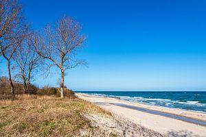 Bäume an der Küste der Ostsee bei Kühlungsborn