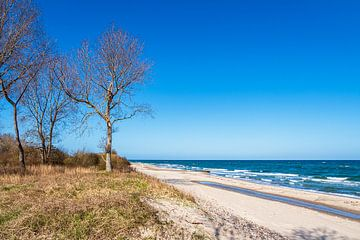 Bomen aan de kust van de Oostzee bij Kühlungsborn van Rico Ködder