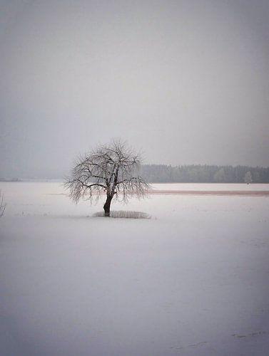 Winter 03 von