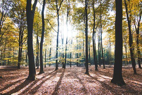 Herfst Glorie van Thijs Pausma