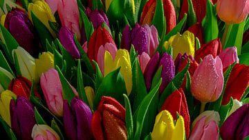 Tulpe von Willy Sengers