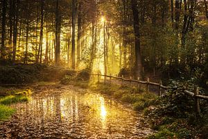 Music forest Belgium van