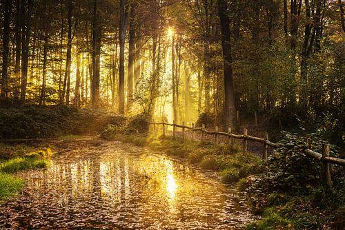 Music forest Belgium