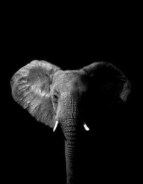 Elefant Schwarz-Weiß von Tanya Gorree