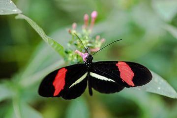 Vlinder von STEVEN VAN DER GEEST