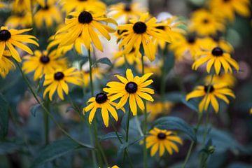 Gele bloemen von Ron Pool