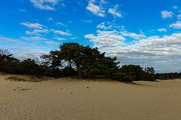 Bomen in de zandvlakt de Heare van Jan Willem Oldenbeuving