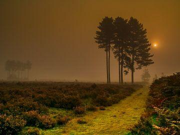 Landschap van Karen de Geus