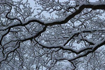 grafisch met sneeuw bedekte boom van Herman Kremer