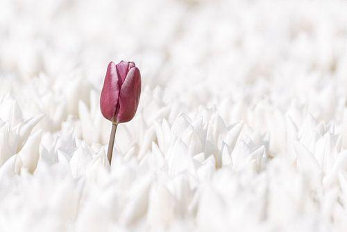 Violette Frühling von Catstye Cam / Corine van Kapel Photography