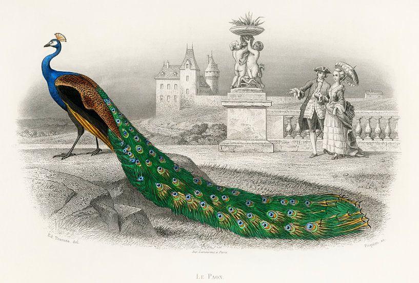 Majestätisch koloriertes Porträt eines Pfaus von Meesterlijcke Meesters