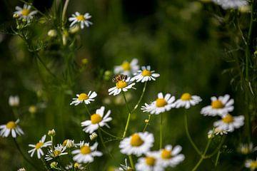 Blumen und Bienen von Angela Kiemeneij