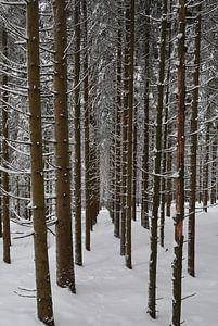Forêt d'hiver sur BVpix