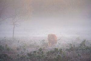 Schottischer Highlander im Nebel von Koen Boelrijk Photography