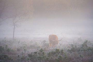 Schotse Hooglander in de mist van Koen Boelrijk Photography