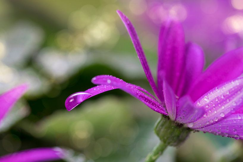 ash flower van Tilo Grellmann