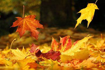 Herbst von Photography Limburg