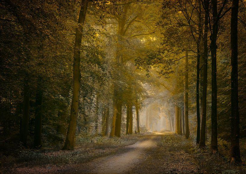 The first light of the day van Jos Erkamp
