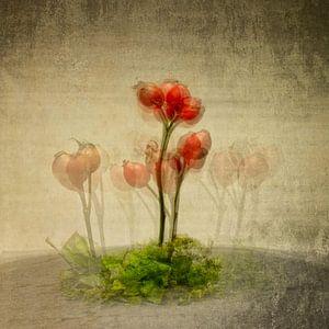 RosehipFamilie van Anke Brehm