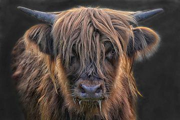 schottisches Hochlandrind-Mädchen von Joachim G. Pinkawa