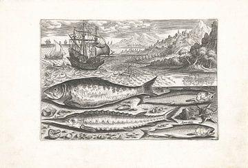 Vier vissen op het strand van Adriaen Collaert, after 1598 - 1618
