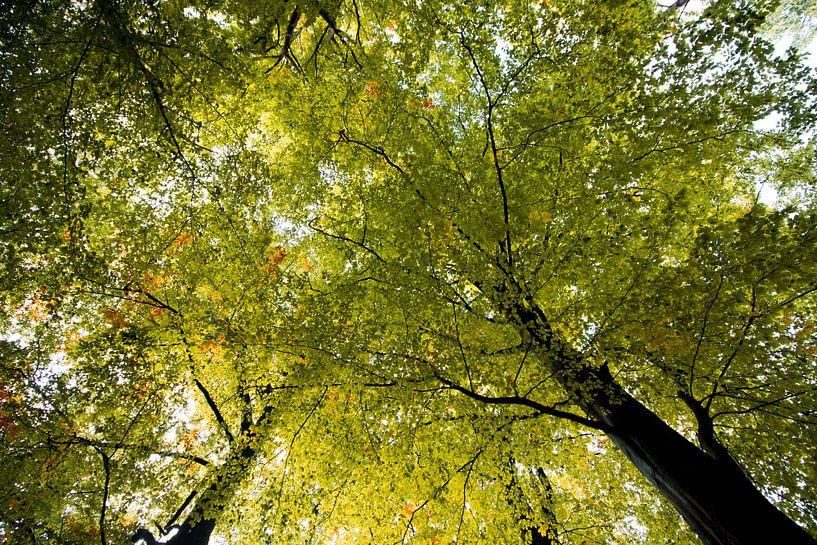 Yellow tree sky van The Pixel Corner