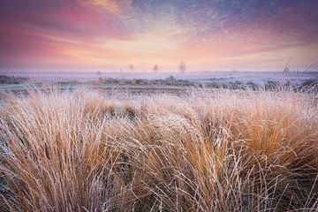 Koude ochtend op het Balloërveld - Drenthe, Nederland van Bas Meelker