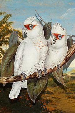 Deux Perroquets Tropicaux