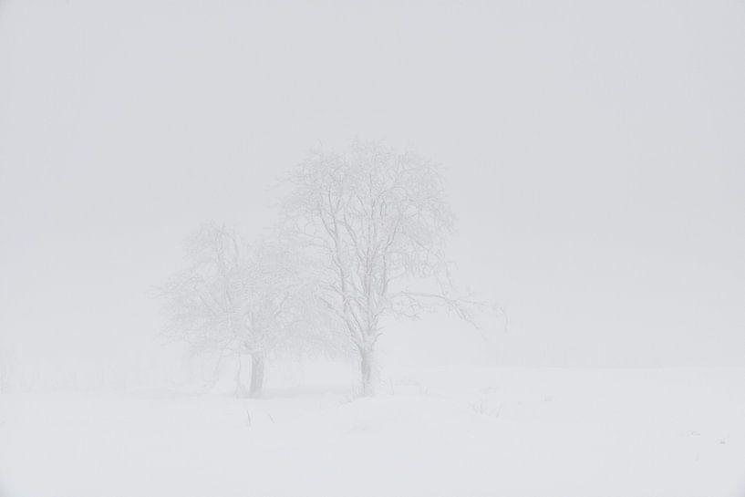 Witte Wereld van Raoul Baart