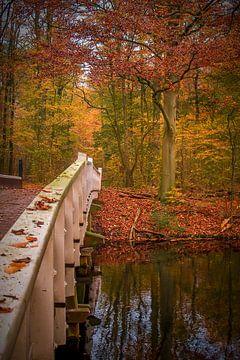 Amsterdam forest bridge van Johan Viele