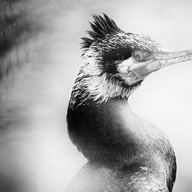 Portrait d'un cormoran (gros plan, noir et blanc) sur Fotografie Jeronimo