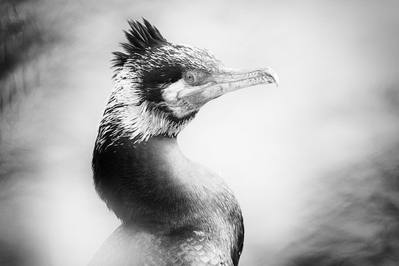 Portret van een aalscholver (close-up, zwart-wit) van Fotografie Jeronimo