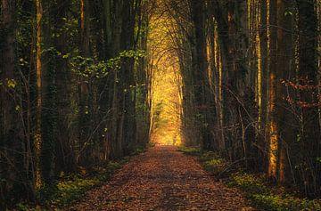 De weg naar het pure goud van Joris Pannemans - Loris Photography