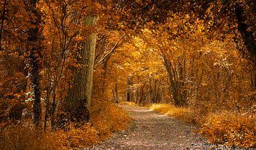 Herfstkleuren in het bos van Rietje Bulthuis