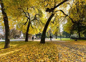 Herfstkleuren in Park Valkenberg Breda van