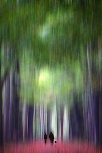 Een herfstwandeling door het bos van