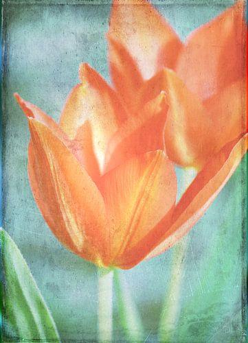 Tulpen van Rosi Lorz