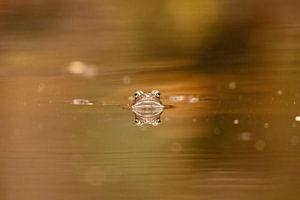Frosch Reflexion von Marjan Slaats