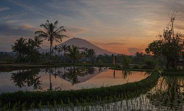 Zonsopgang over rijstvelden en Mount Agung van Michiel van den Bos