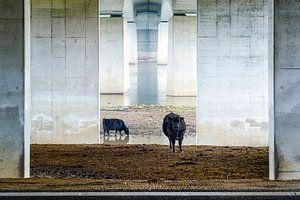 Koeien onder de brug