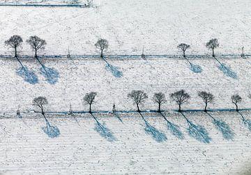 Evenwijdige rijen bomen in besneeuwd weiland van Sky Pictures Fotografie