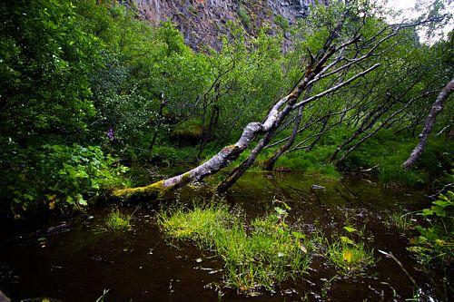 Omgewaaide Bomen In Moeras van Luuk Holtrop