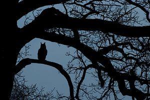 Oehoe in het blauwe uurtje in oude eikenboom