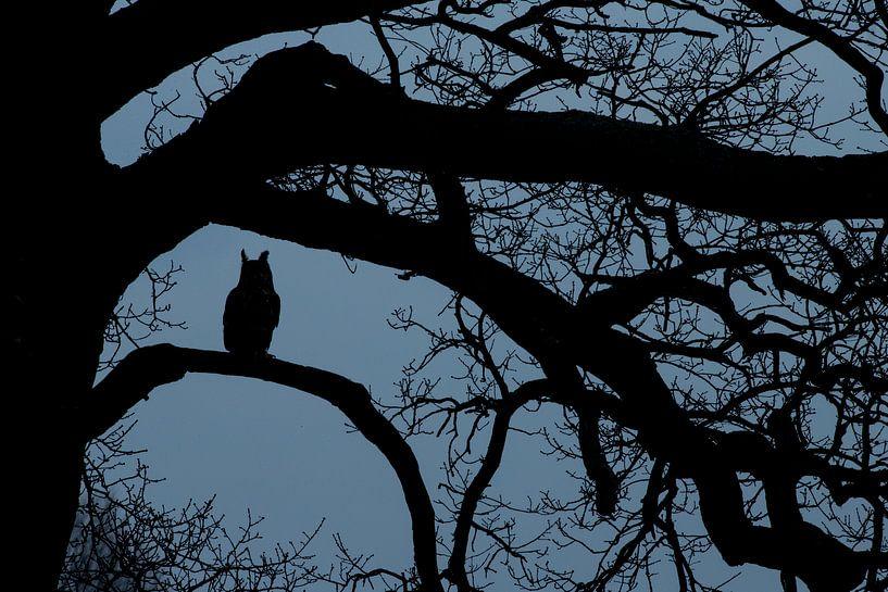 Oehoe in het blauwe uurtje in oude eikenboom van Jeroen Stel