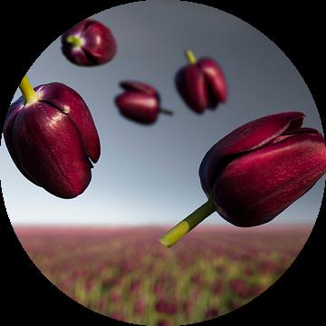 Flower Power - Queen of Night van Claire Droppert