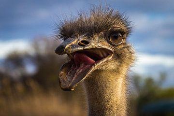 Grappige Struisvogel van Edwin Mooijaart