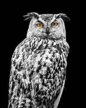 Zwart wit Uil met kleur ogen von Patrick van Bakkum